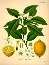 medicinal-plants-5
