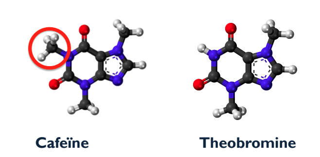 Cafeine theobromine, Evelien Rozema